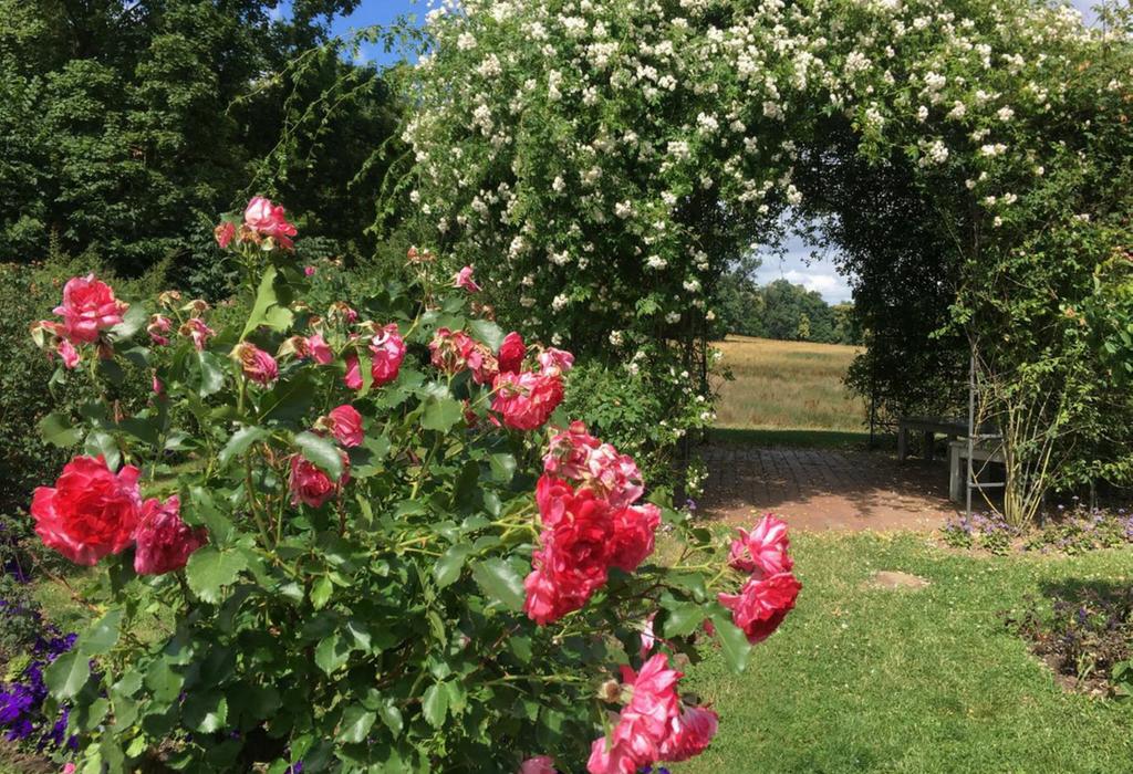 rosengarten-hohenzieritz