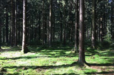 trailrunning-frankenwald