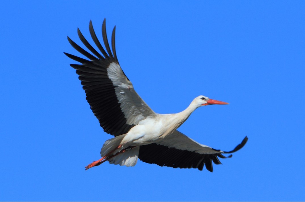 storch andalusien