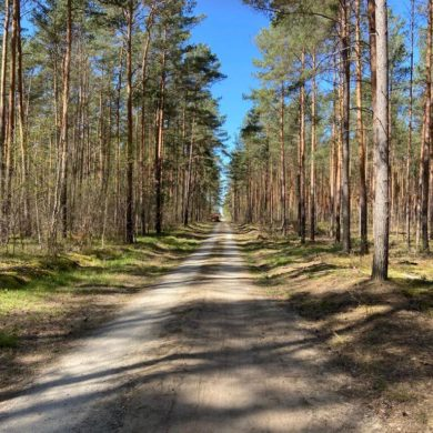 Traillauf Strecke im Wald