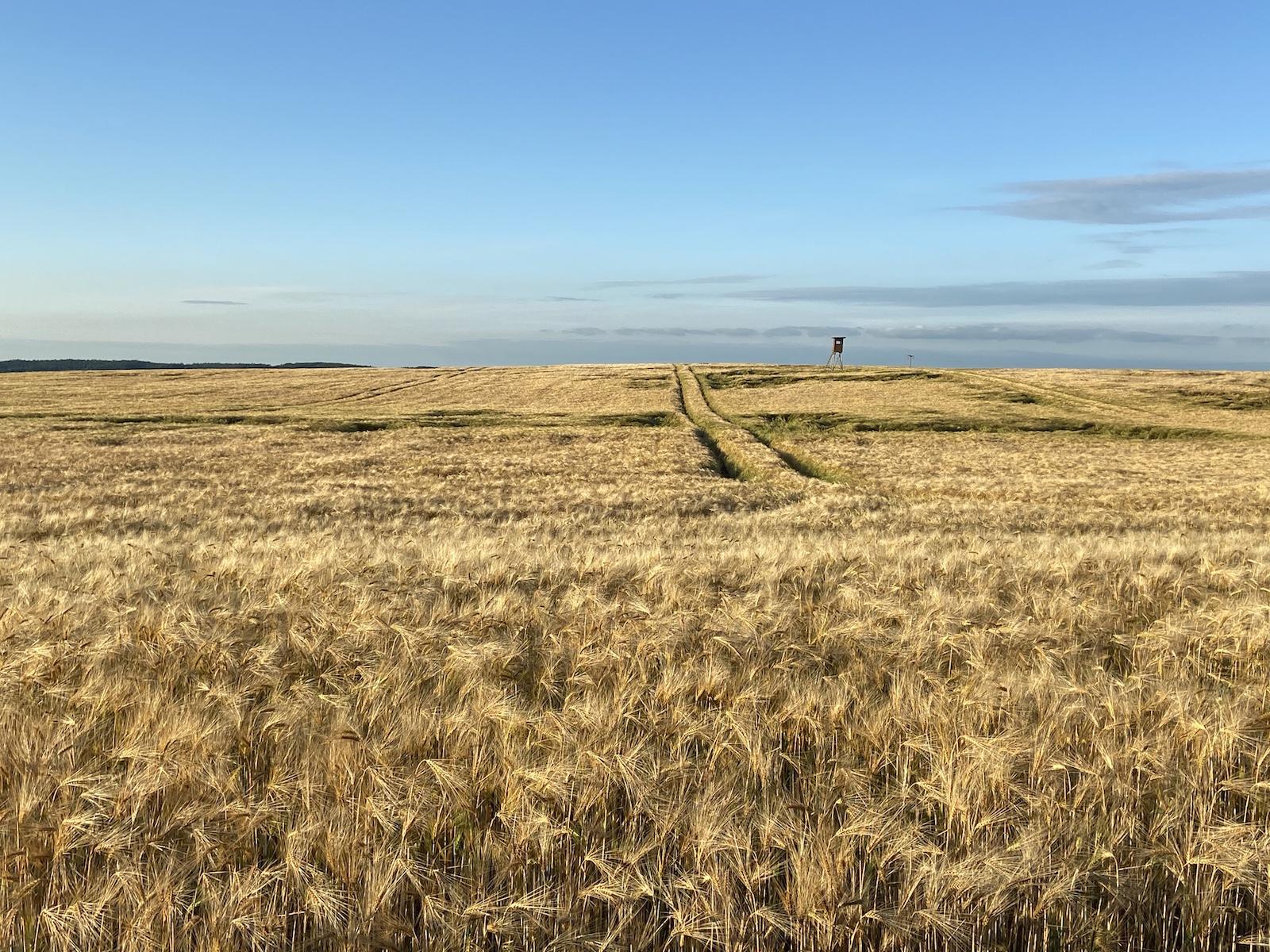 Feld in Pohnstorf