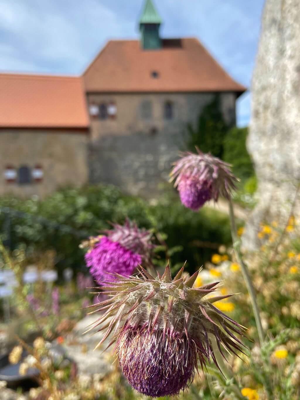 Burg Hohenstein Kräutergarten