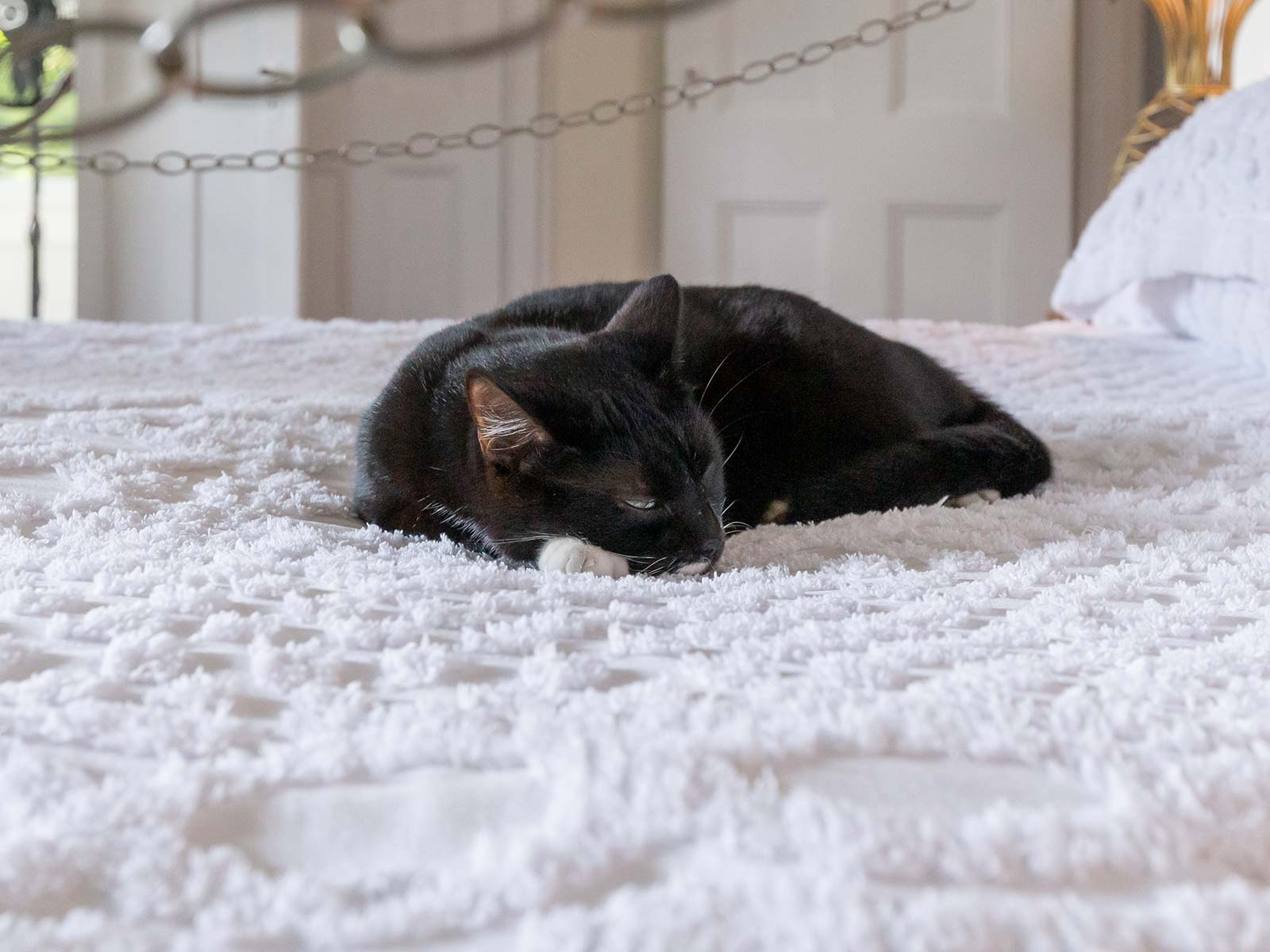 katzen ernest hemingway haus florida