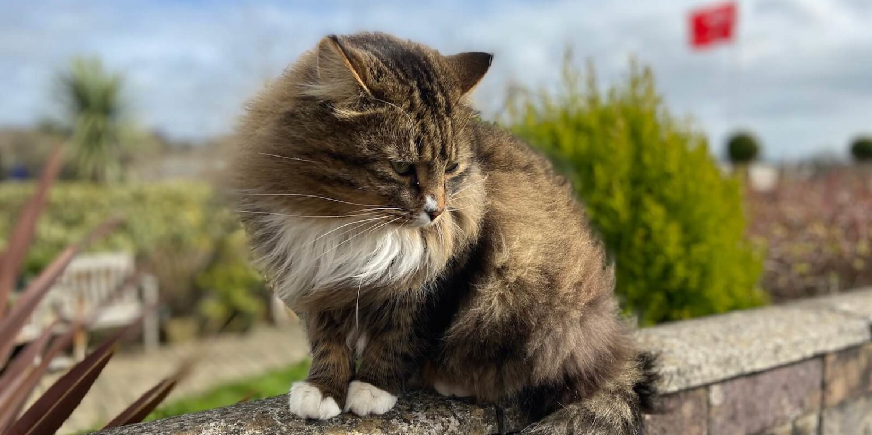 katzenbegegnungen im urlaub