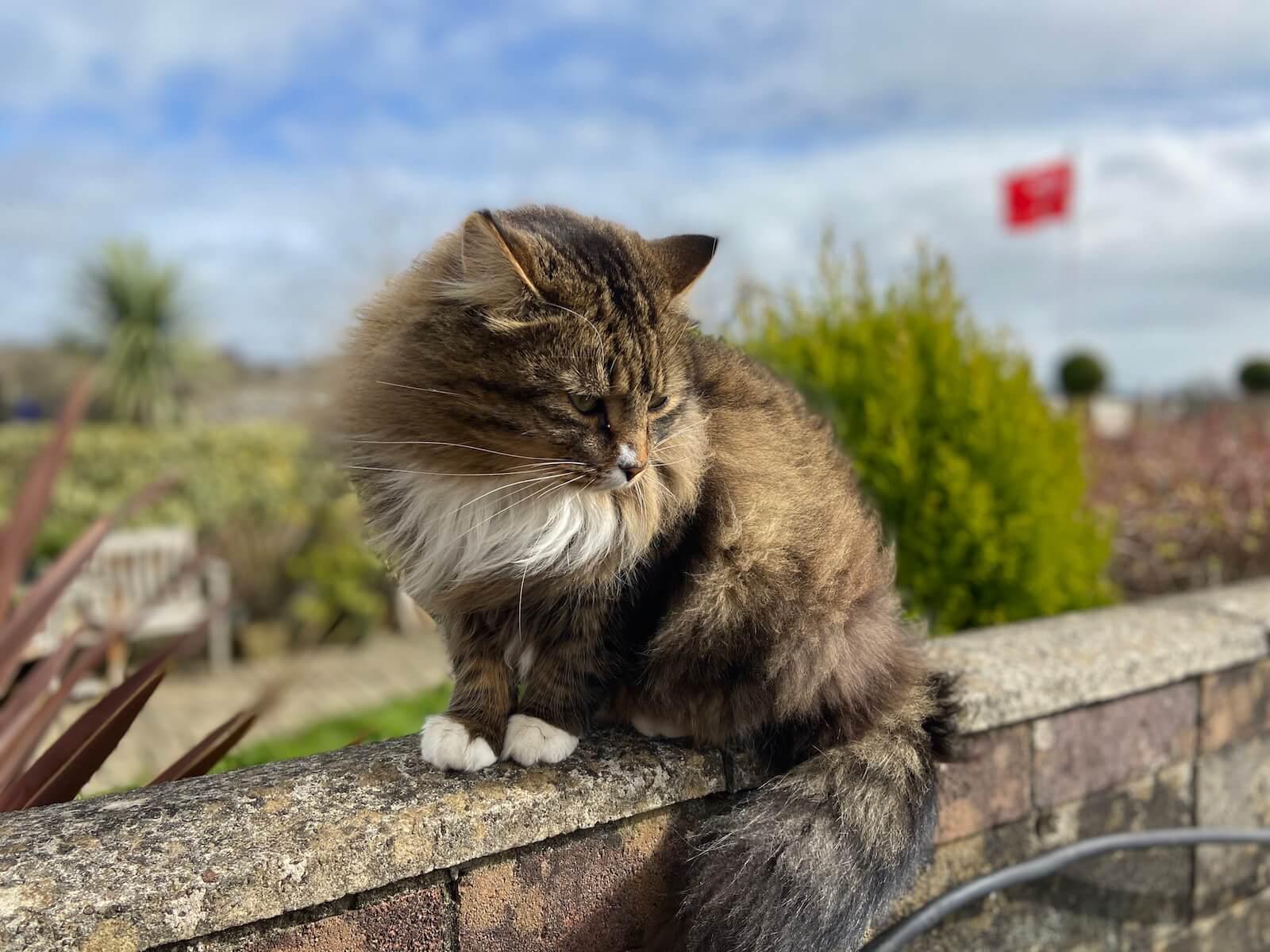 Samtpfötchen weltweit – Katzenbegegnungen auf Reisen
