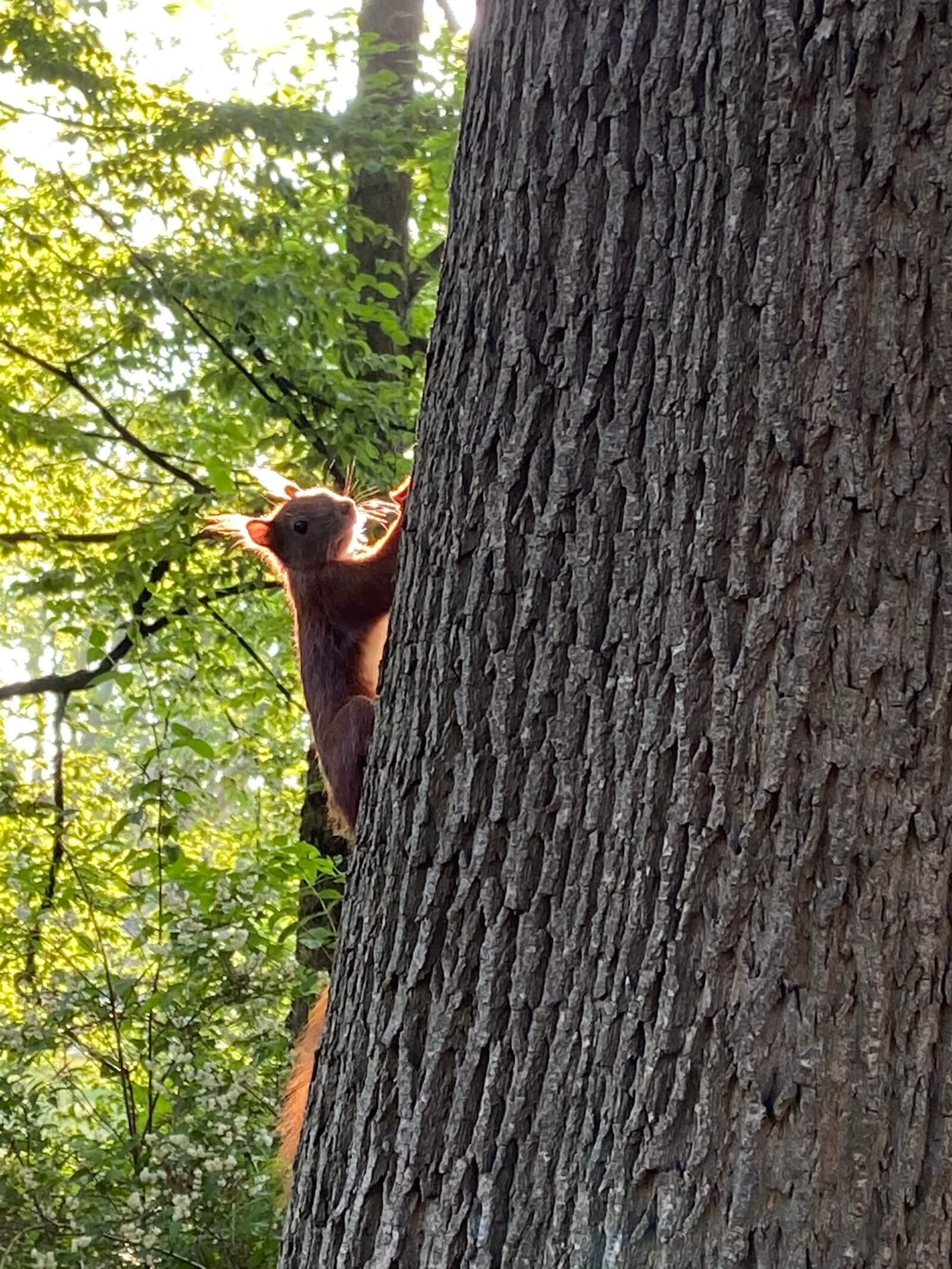 sonnenaufgang eichhörnchen