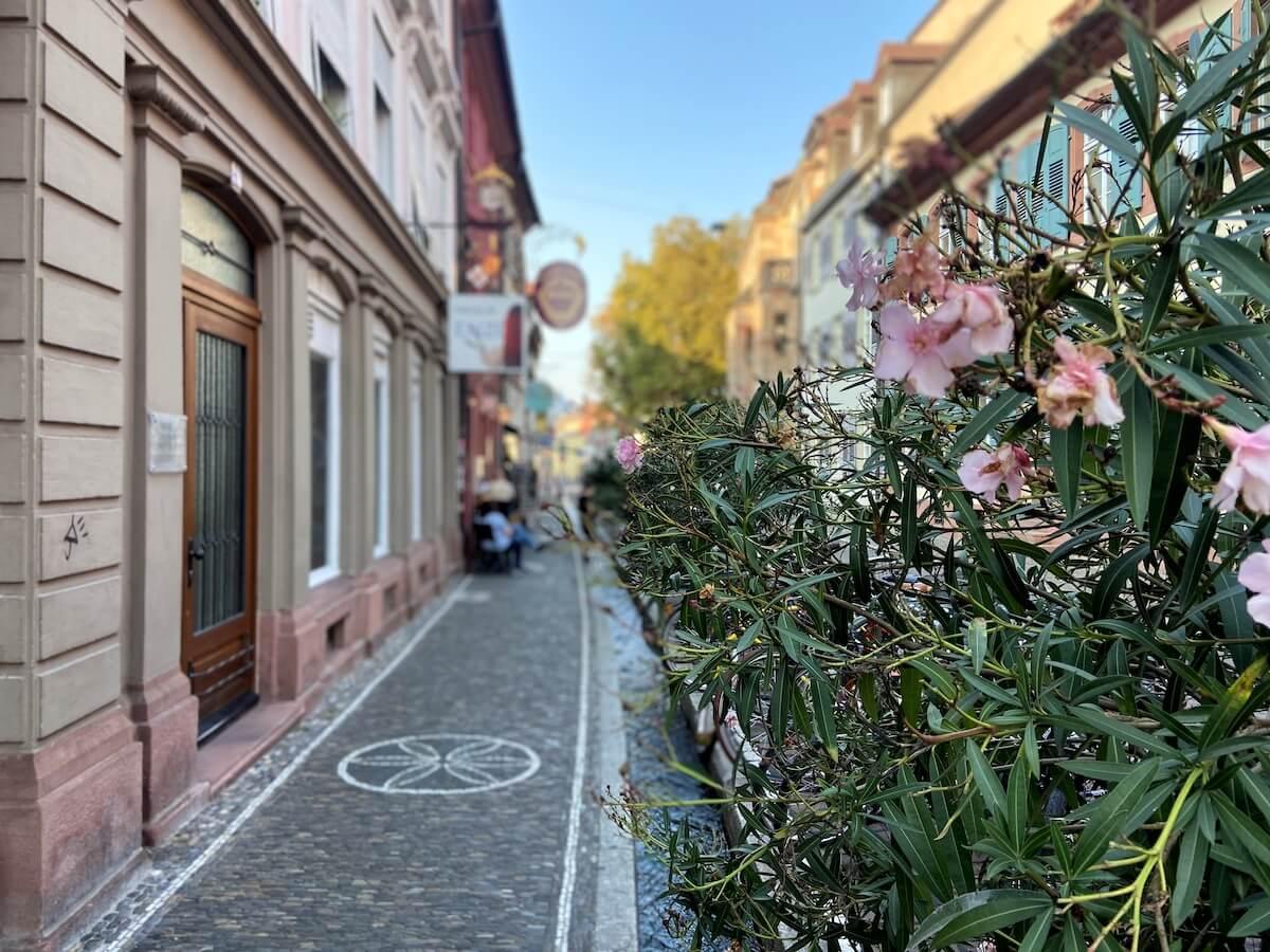 Ein Bummel durch Freiburgs Altstadt
