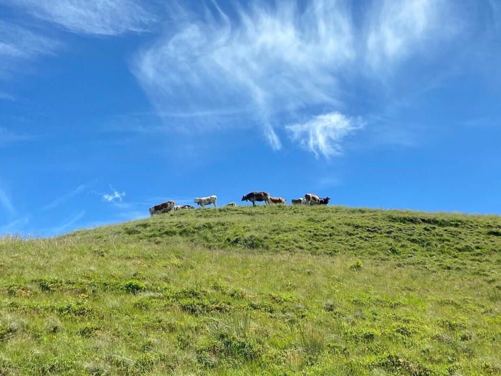 meditationsweg ammergauer alpen hörnle