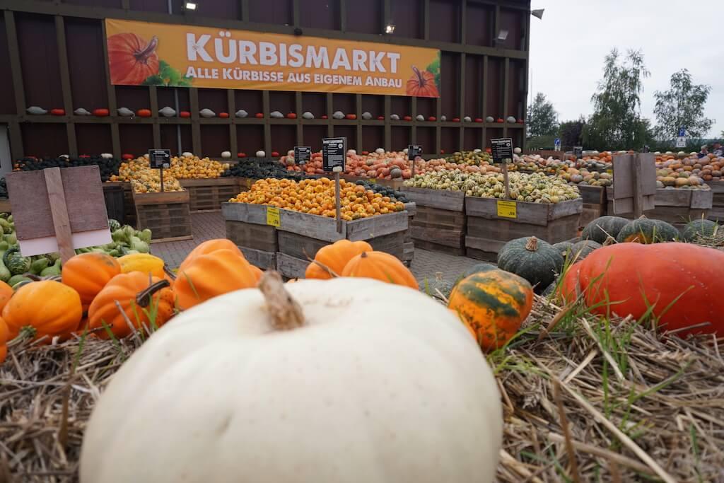 Kürbismarkt Spargelhof Klaistow bei Berlin